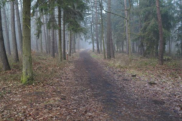 klimaty bałtyku ściezki biegowe